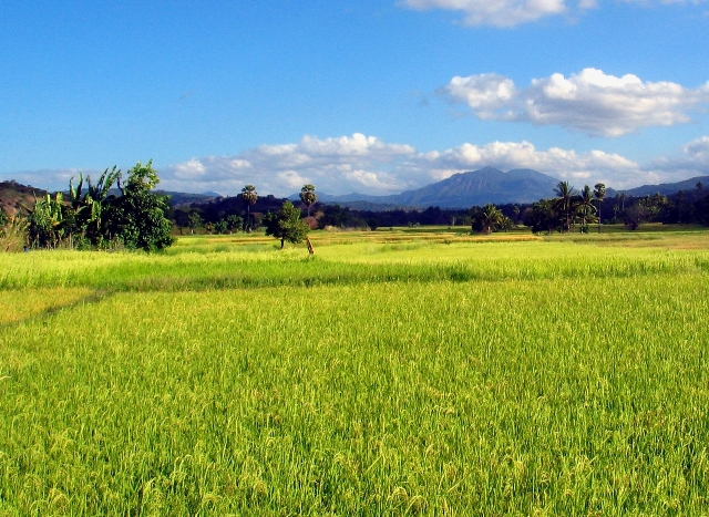 East Timor Mountains & Rice Fields