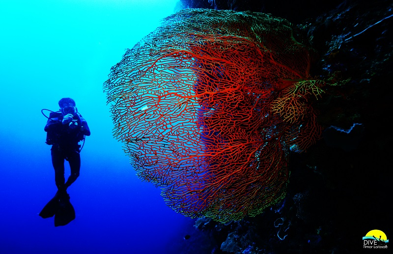 Sea fan & Diver at Franks Crack