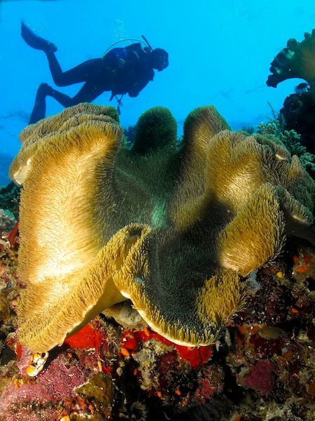 Scuba Diving in East Timor