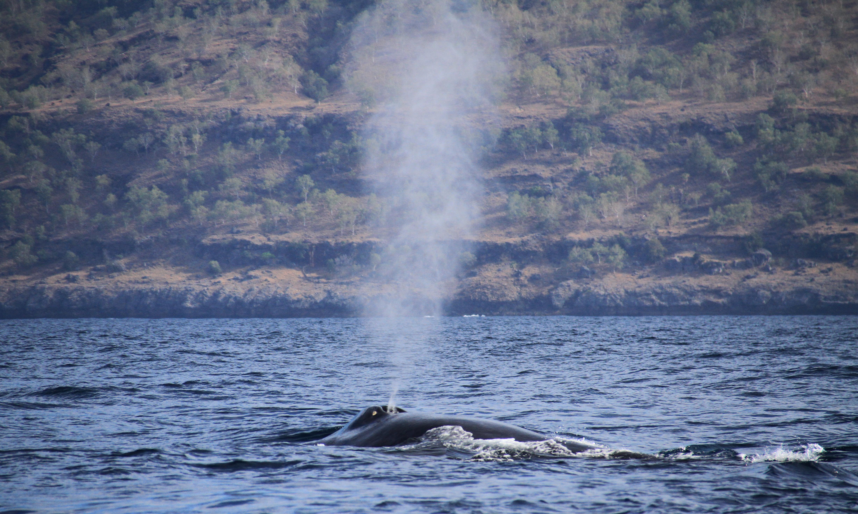 Blue-whale-4