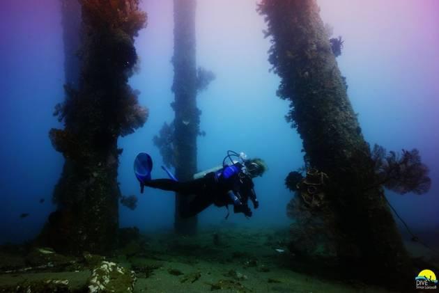 Weird and Wonderful Muck diving