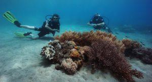 Timor reef