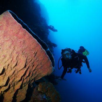 Diving in Timor Leste