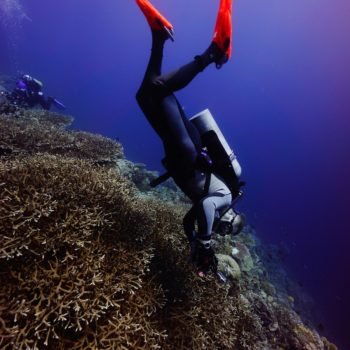 Diver explores Timorese reef