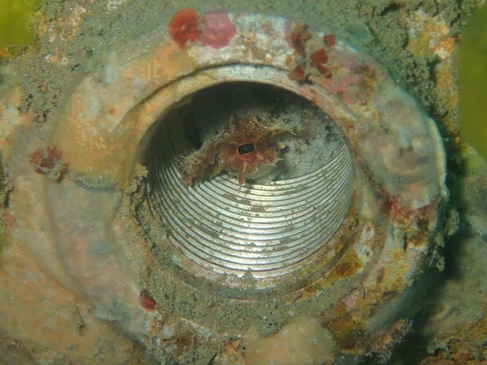 La Casa de DTL Artificial Reef
