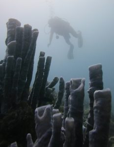 tube sponges in the coral reef of christoe rei