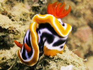 Nudibranch and groupers at one tree Timor Leste
