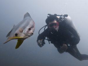 batfish Pertamina jetty East Timor
