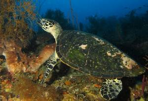 Turtle seal rock Timor Leste