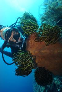 coral diving timor leste