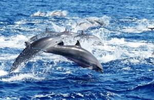 whale watching dolphins East Timor