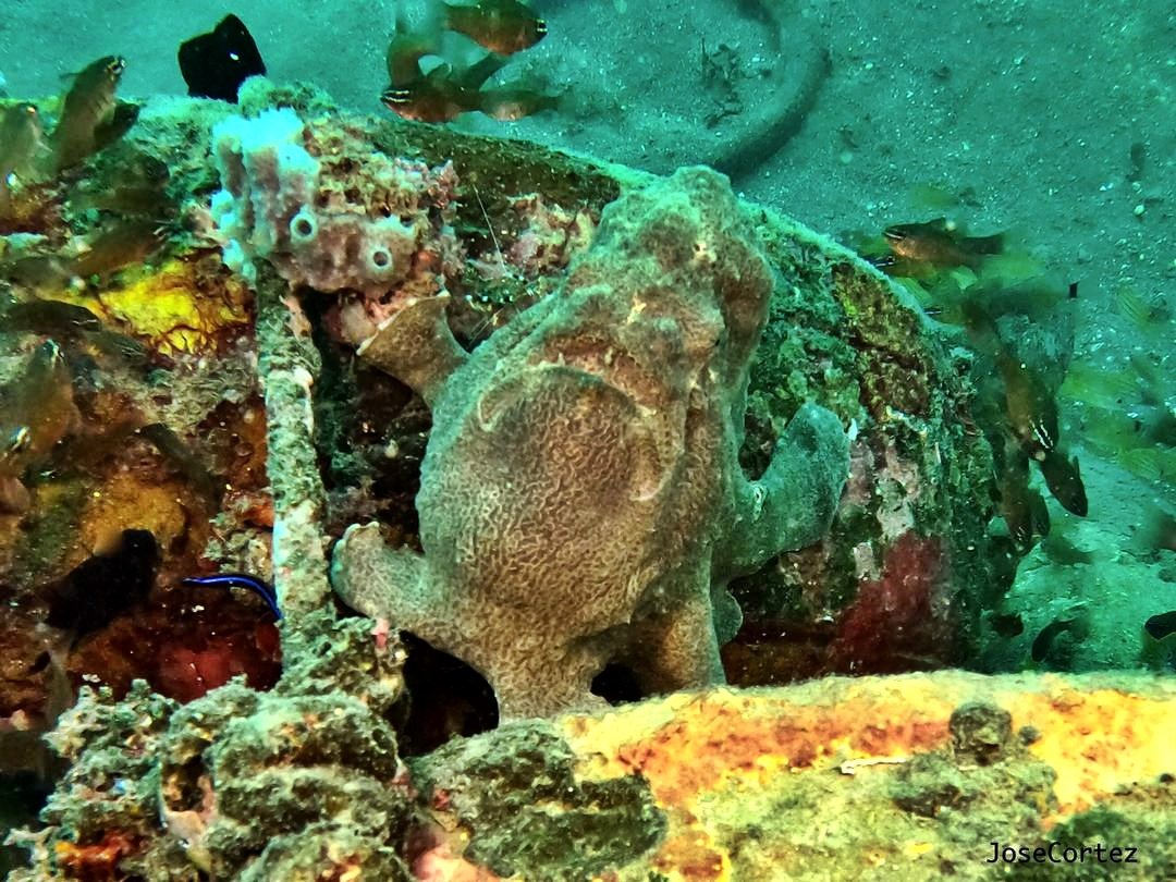 The Frogfish – Ugly but loveable!